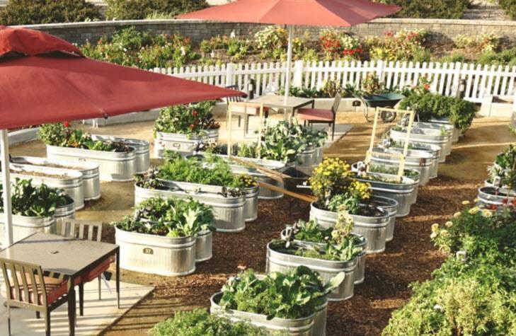 Harvest at The Preserve Community Garden